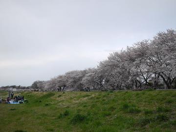 hanami4.jpg