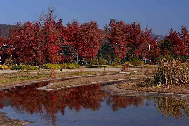 水溜まりに映る紅葉