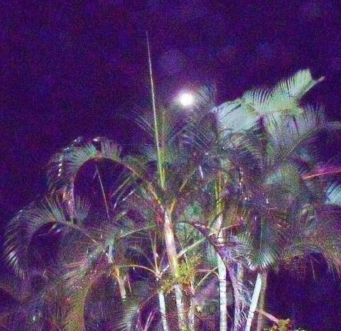 ヤシの木と月