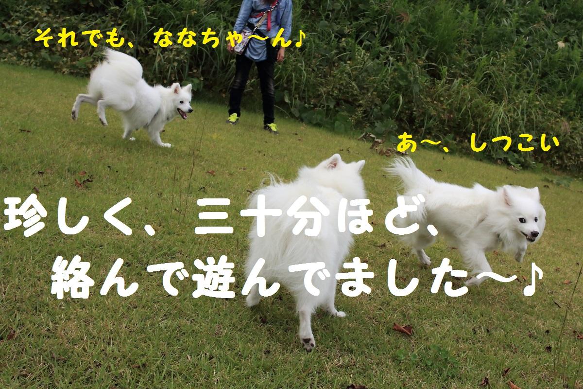 14_201310022023496cd.jpg