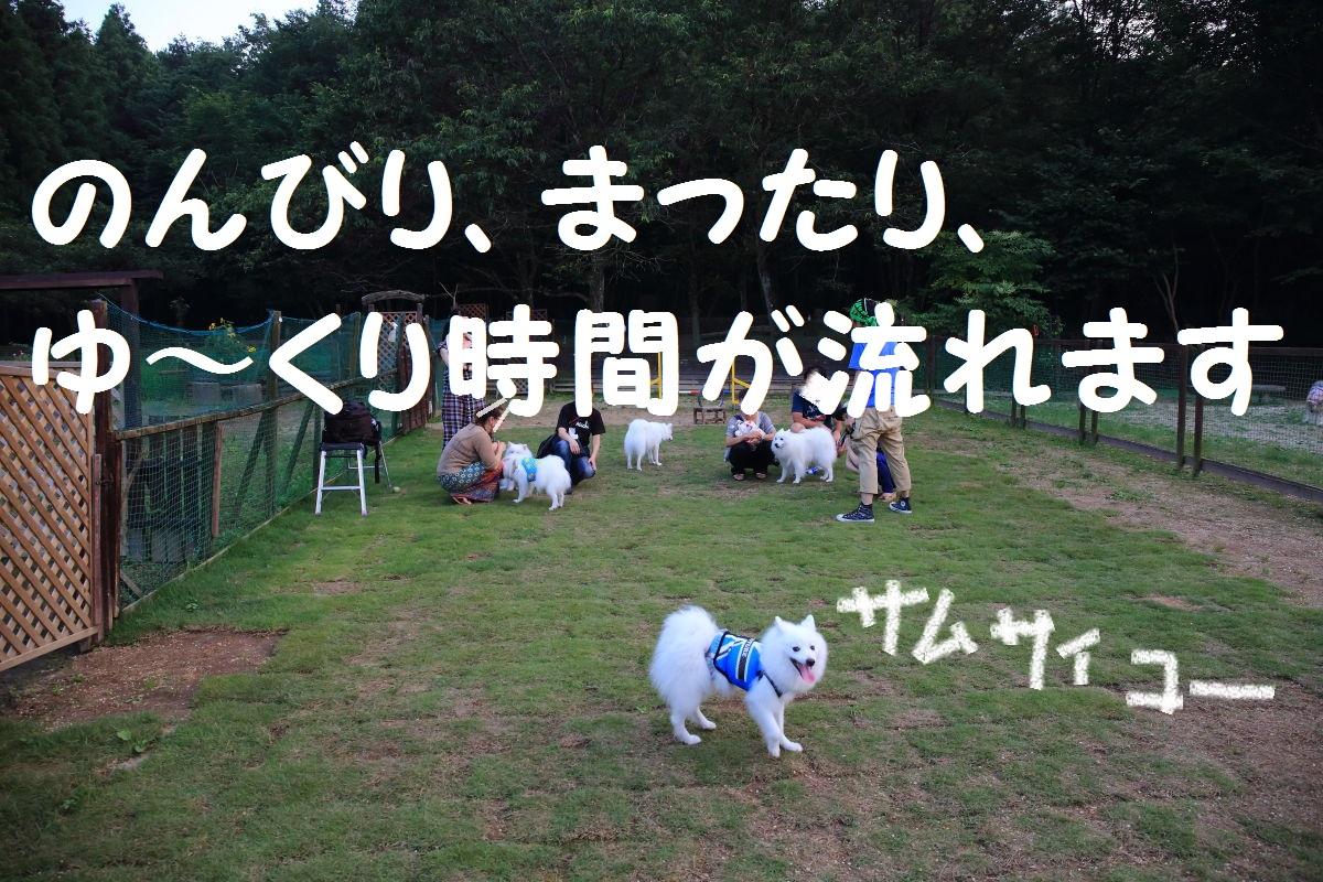 16_201308170554065f8.jpg