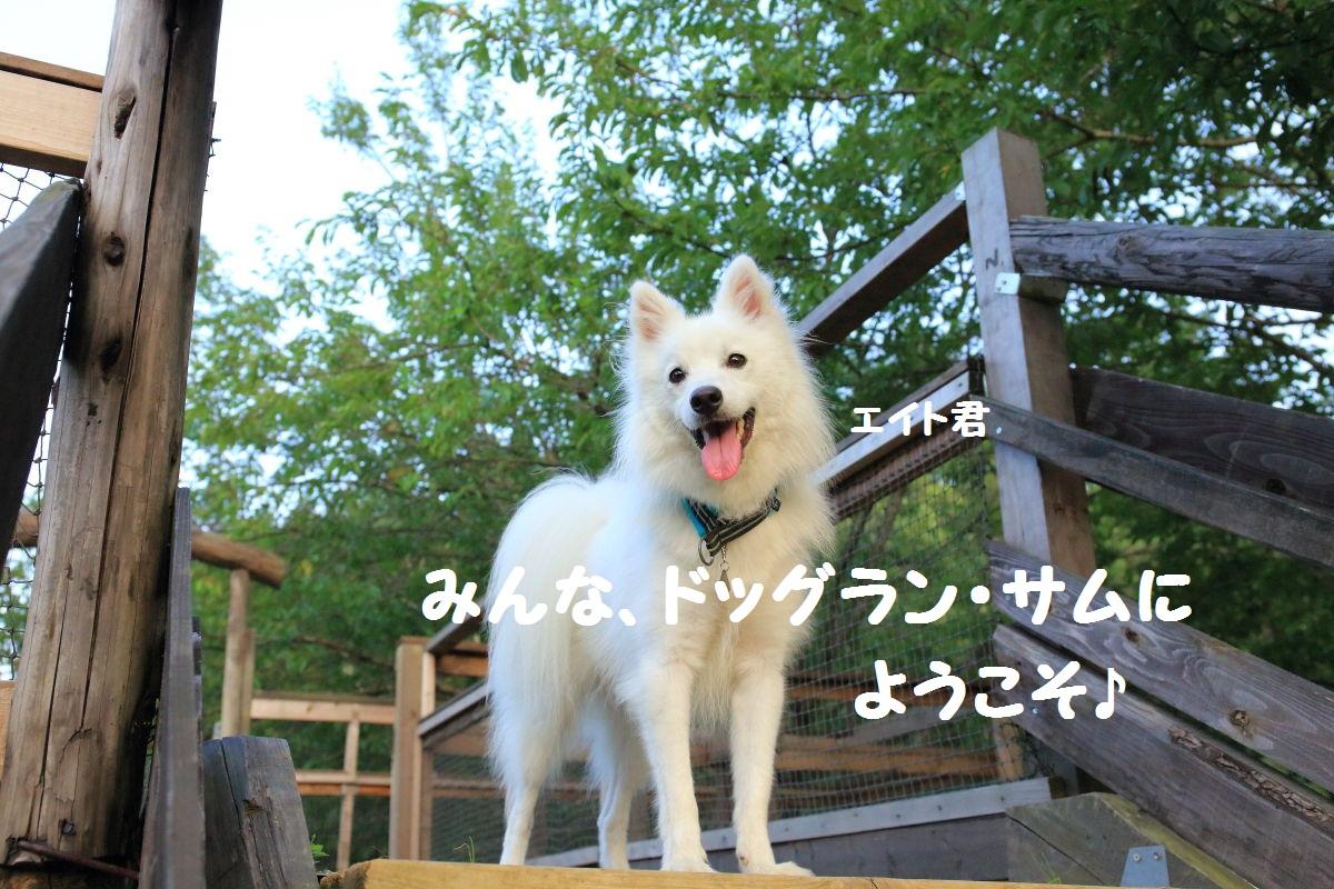 1_20130925194943606.jpg