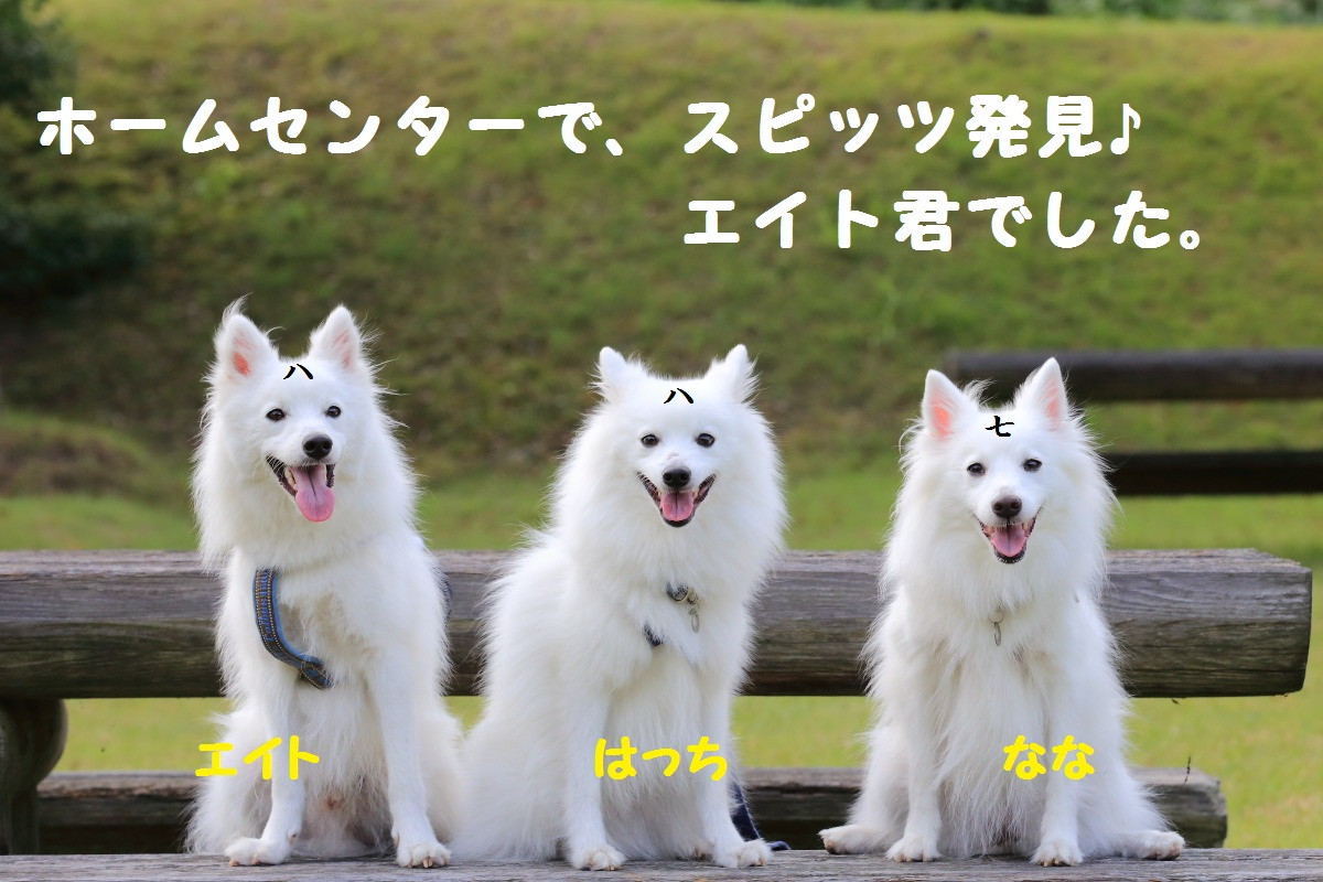 1_20131002202134857.jpg