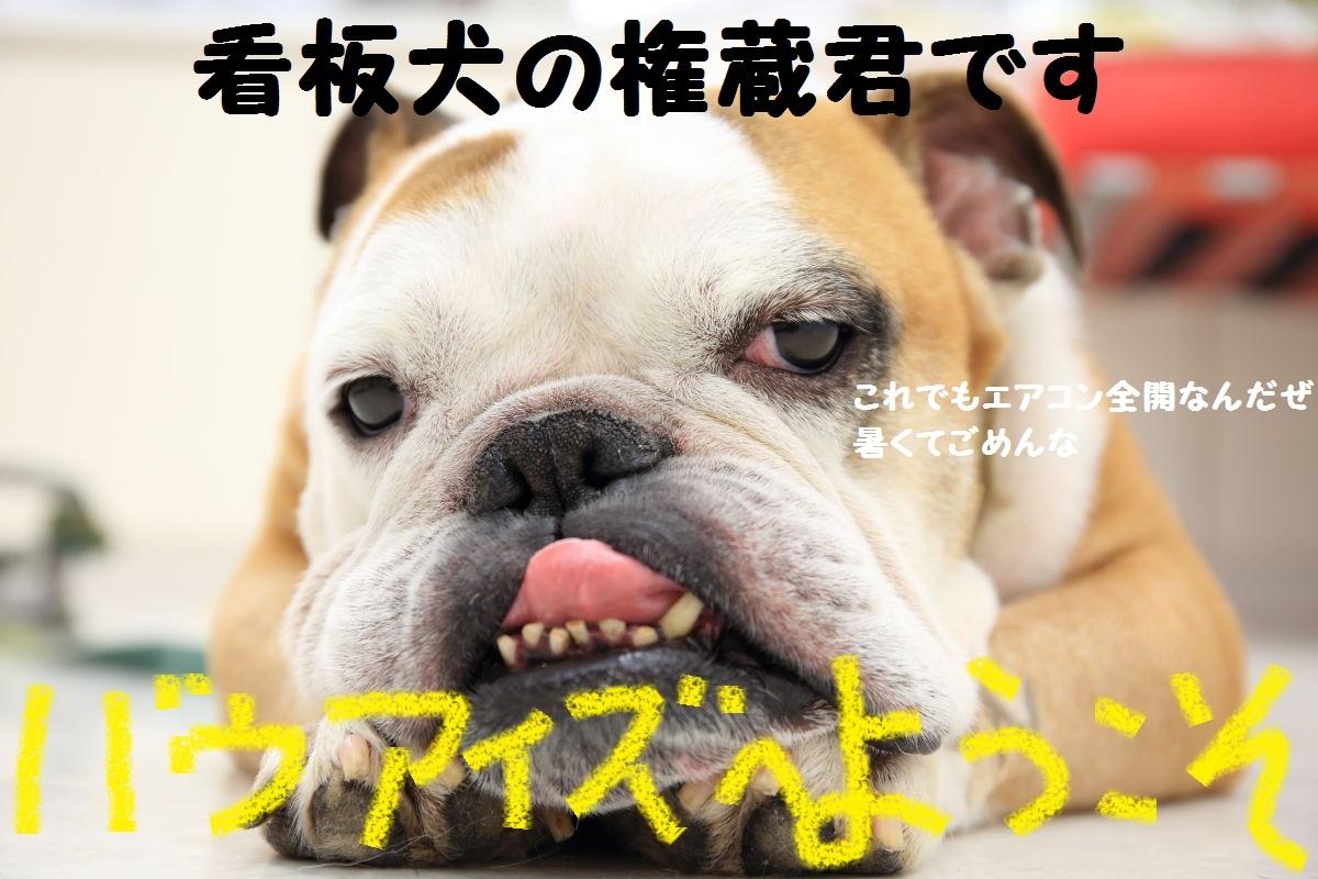 2_20130812084305663.jpg