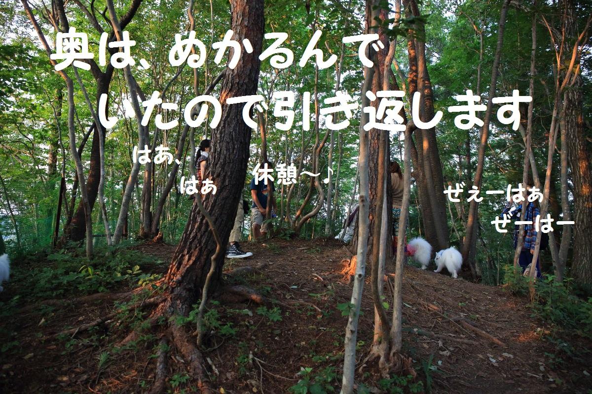 5_20130819195050c24.jpg