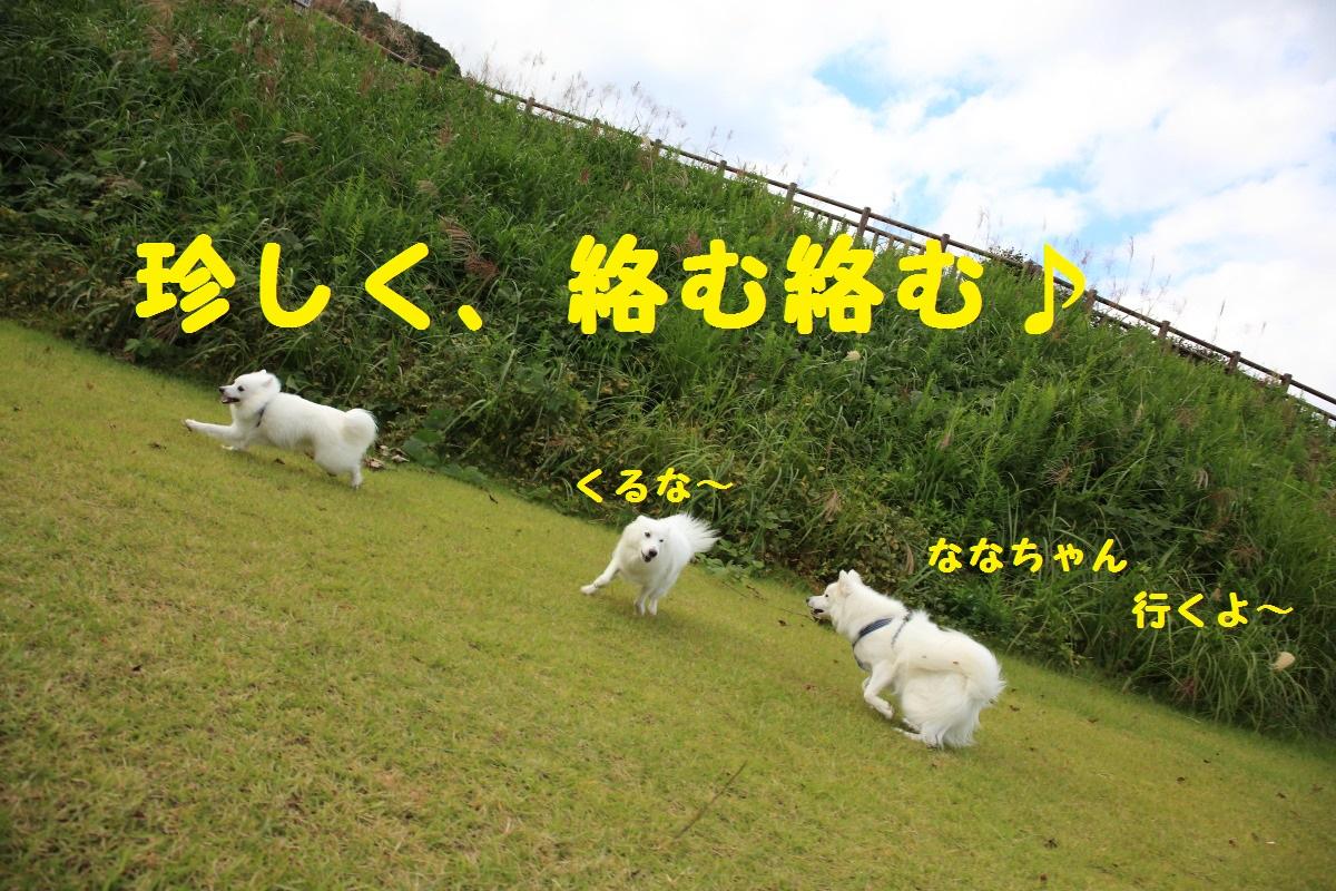 5_20131002202131892.jpg