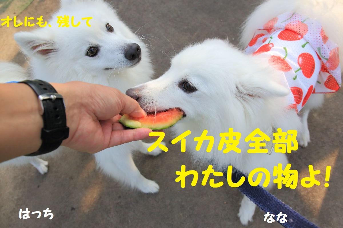 6_20130926210820722.jpg