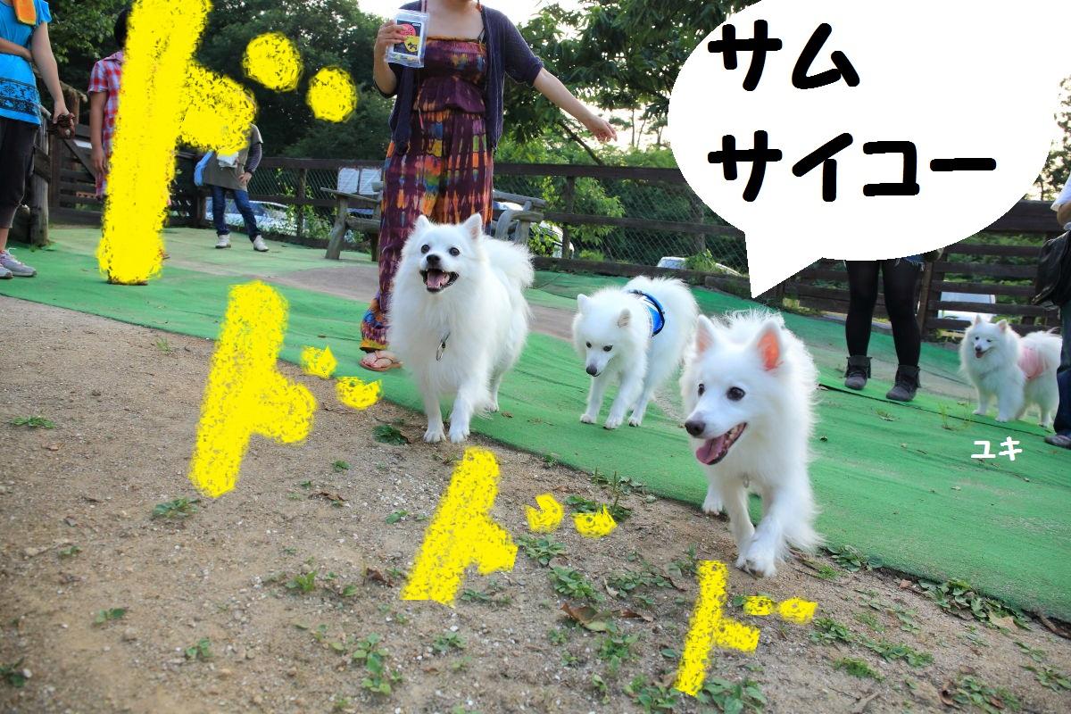 7_20130925195048bf1.jpg