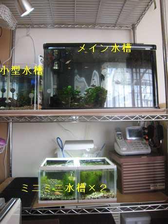 水槽コーナー