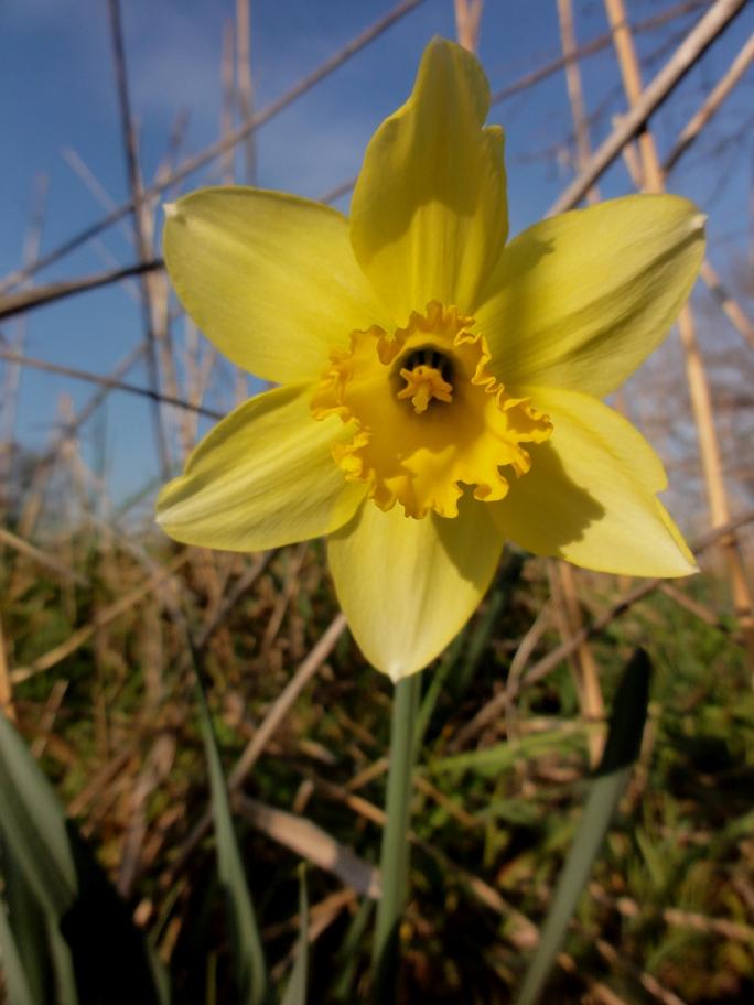 20130315黄色い花