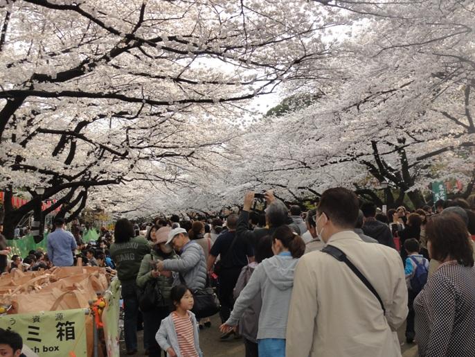 20130323上野公園花見A