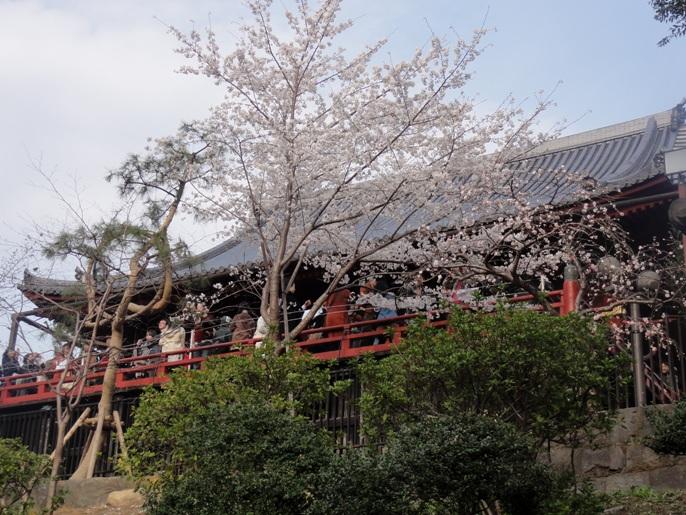 20130323上野観音堂
