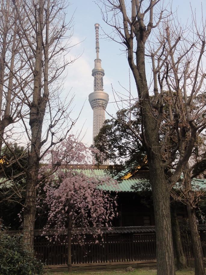 20130323牛島神社&スカイツリー