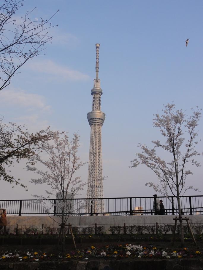 20130323言問橋ー吾妻橋中間点&スカイツリーA