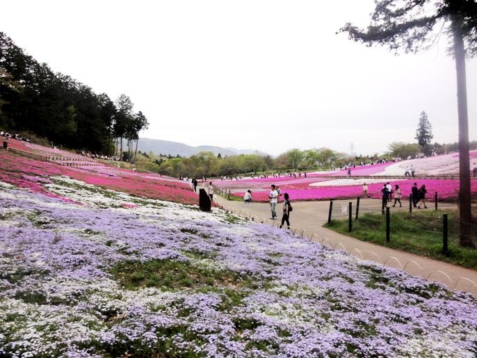 20130417秩父芝桜の丘菖蒲田口よりA