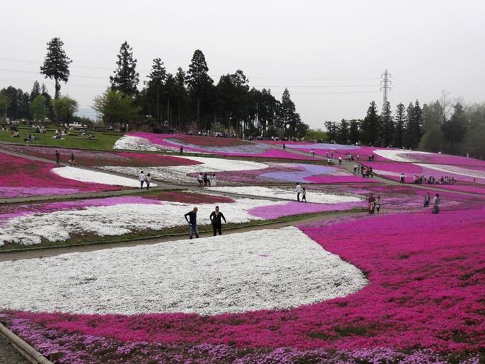 20130417秩父芝桜の丘西斜面から東斜面