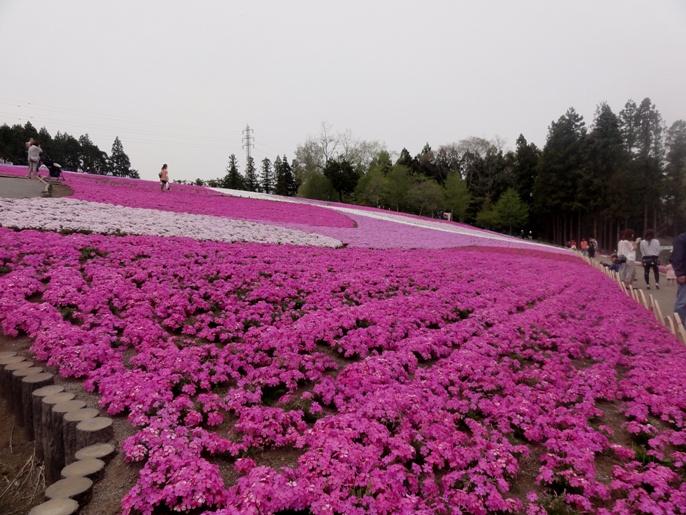 20130417秩父芝桜の丘東斜面
