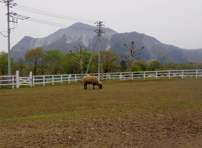 20130417秩父芝桜の丘&羊A