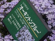 20130417秩父芝桜の丘.オーキントンブルー.A.ネームプレート
