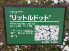 20130417秩父芝桜の丘.リットルドット.Aネームプレート