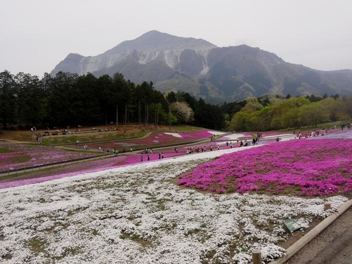 20130417秩父芝桜の丘.リットルドット.&武甲山A