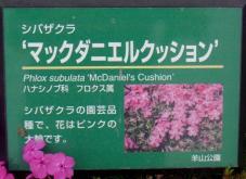 20130417秩父芝桜の丘.マックダニエルクッションAネームプレート