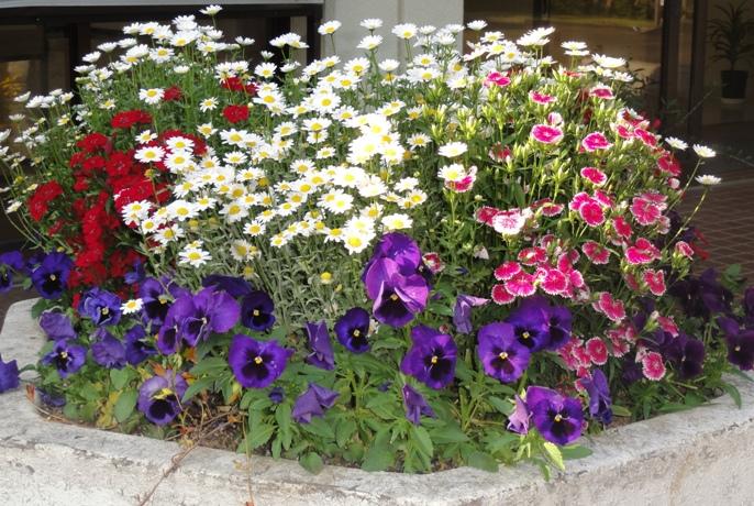 20130505 緑化都市植物園 花壇 10A