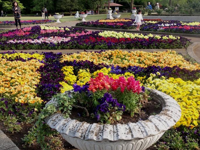 20130505 緑化都市植物園 花壇 1 A