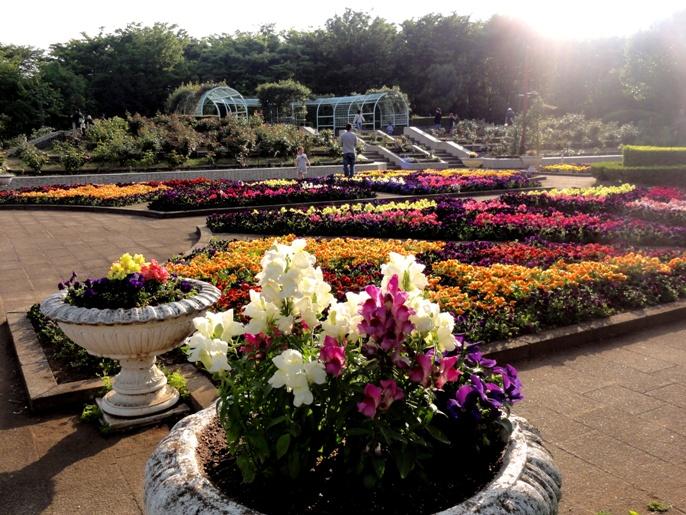 20130505 緑化都市植物園  花壇 7 A