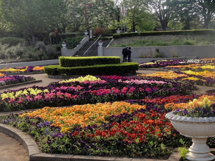 20130505 緑化都市植物園 花壇 6 A