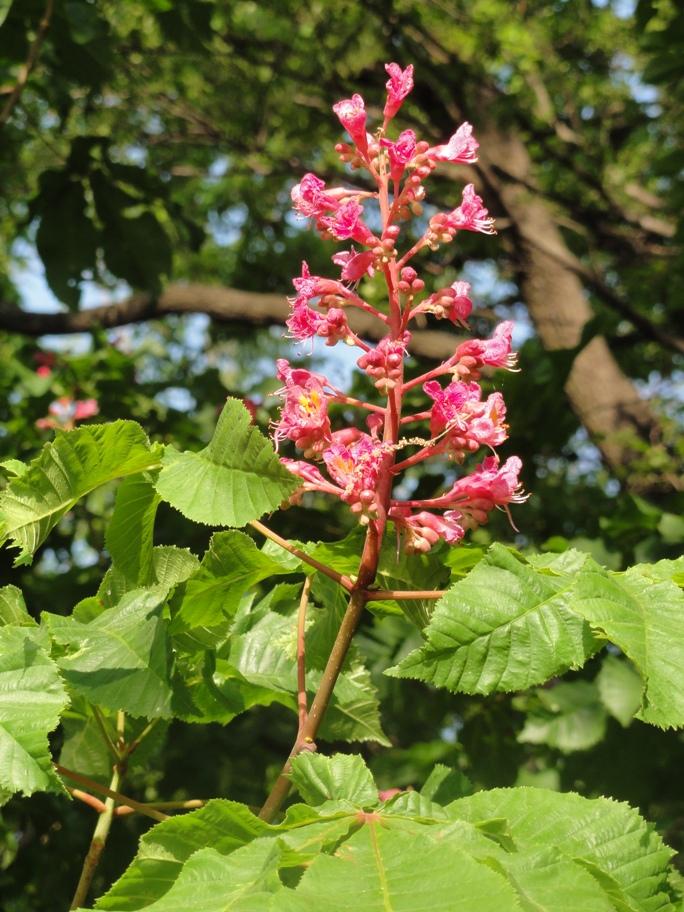 20130505 緑化都市植物園  赤い花