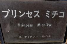 20130515都市緑化植物園 薔薇 ミセス・ミチコ.・プレート.