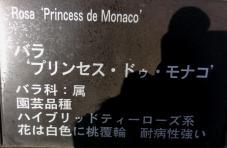 20130515都市緑化植物園 薔薇 プリンセス・ドゥ・モナコ・プレート