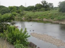 20130521入間川の河川敷2