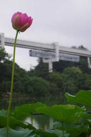 千葉モノレール 千葉公園