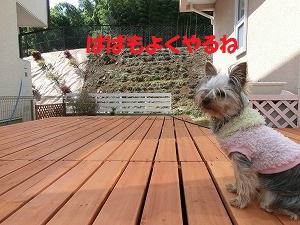 CIMG4651_20120312133501.jpg