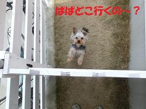 CIMG4710_20120317224948.jpg