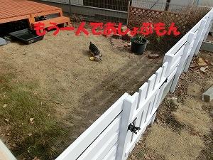 CIMG4717_20120317224948.jpg