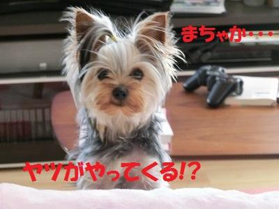 CIMG4912_20120409224514.jpg