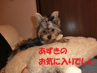 CIMG5920_20120913210956.jpg