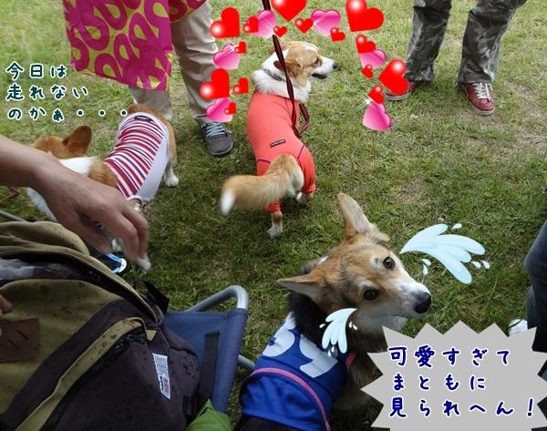 11_20130522154331.jpg