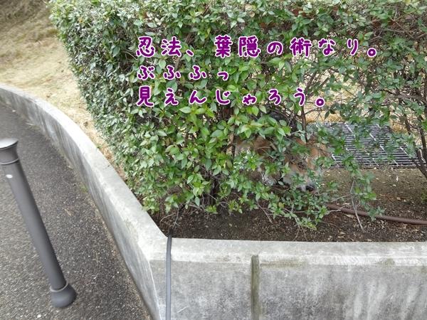 1_20130309143444.jpg