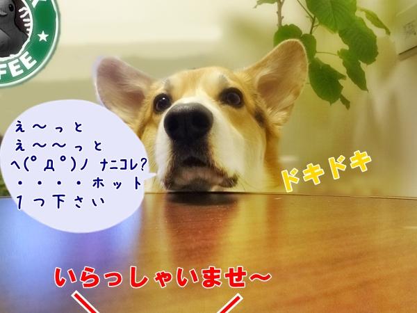 2_20130316222427.jpg