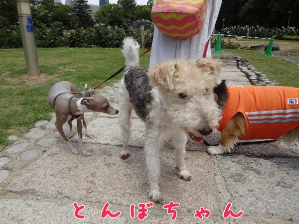 2_20130612014124.jpg