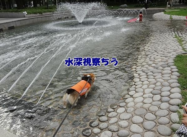 2_20130628155524.jpg