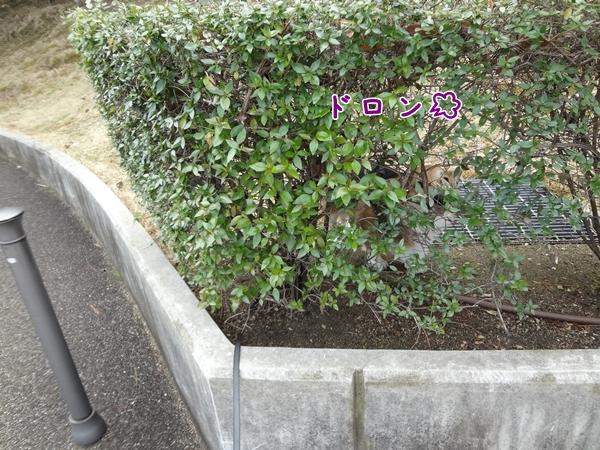 3_20130309143446.jpg