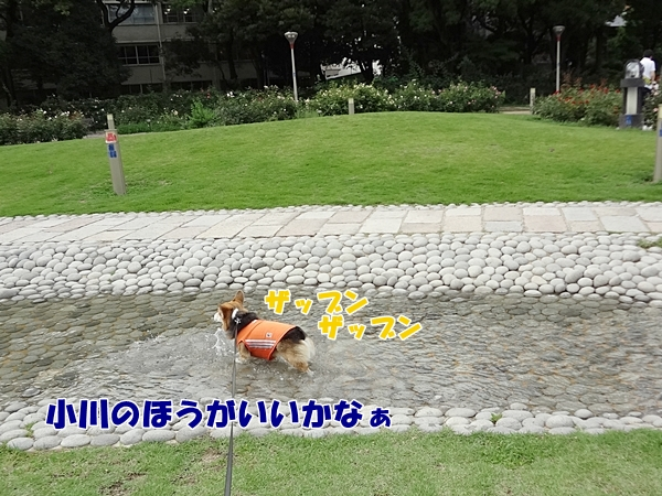4_20130628155529.jpg