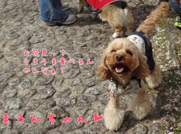 5_20130410140152.jpg