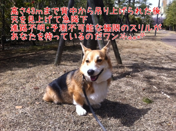 8_20130315182745.jpg
