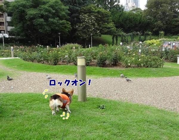 9_20130628155552.jpg